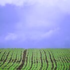 Over the hill by AmandaJanePhoto