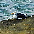Solitary Seagull by debidabble