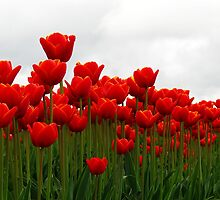 Row of Red by Tracy Friesen