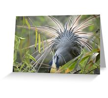 Feathers In Back Light - Plumas En Contraluz Greeting Card