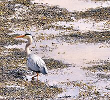 Heron by Simon Pattinson