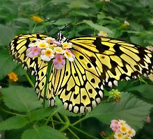 Giant Yellow Butterfly by Morag Bates