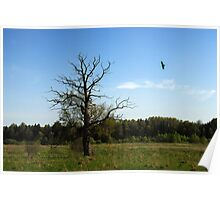 Lonely oak in spring time Poster