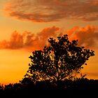 Gilt-edged Clouds by marymdmed