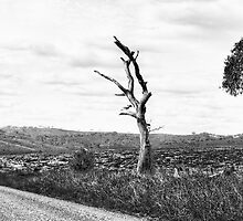 A Road Less Travelled - Oberon, NSW - The HDR Experience by Philip Johnson