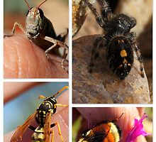 Handling All But The Jumping Spider by Betsy  Seeton