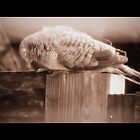 when it rains (1) ~ read the 'story' first  by Angelika Sielken