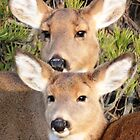 Two Deer on Long Island by Darkwing717