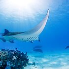 Manta Magic by Five by Karen Willshaw