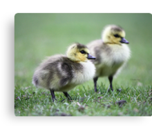 Another lesson learned Canvas Print