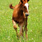 Young Colt by Dennis Stewart