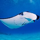 Manta Watch by Karen Willshaw