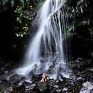 Little Falls - Mt Wilson NSW Australia by Bev Woodman