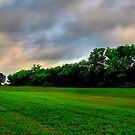 Field of Green by aprilann