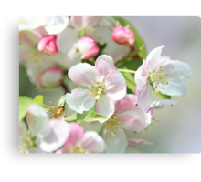 Blooming Softly Canvas Print
