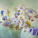 Little spring treasures by Jacky Parker