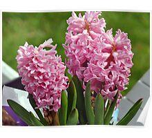 Flowers in a Wheelbarrow Poster