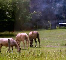 Horses grazing by ♥⊱ B. Randi Bailey