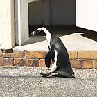 Penguin on a Mission by RachelSheree