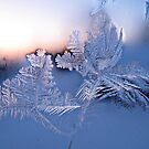 The beauty in the ice. by queenxtc