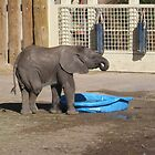 Zuri - Salt Lake City Zoo by aprilann