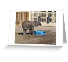 Zuri - Salt Lake City Zoo Greeting Card