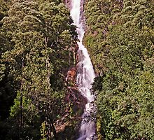 Montezuma Falls - Tasmania's Highest Waterfall by TonyCrehan
