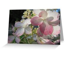 Pale Pink Greeting Card