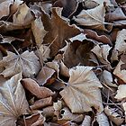 Frosty Leaves by Mary Fox