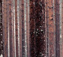 5.5.2012: Three Birches by Petri Volanen