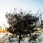 Burleigh Tree by GCBela