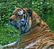 Kavacha Just Relaxing by Linda Miller Gesualdo