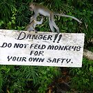 Danger Do Not Feed The Monkeys by hannahk81