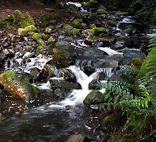 Strickland Falls by Asoka