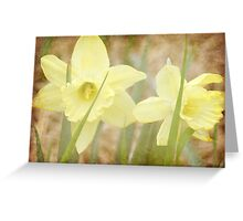 Daffodils along the Creek Greeting Card