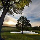 maple side farms by iamwiley