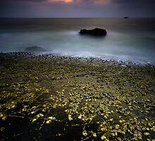 Glittering Barnacles! by Deepak Varghese