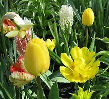 Sunlit Yellow Tulips - Keukenhof Gardens by kathrynsgallery