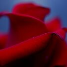 Red Rose by TeAnne