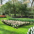 Beds of Red Tulips and Pink Hyacinths - Keukenhof Gardens by MidnightMelody