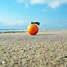 orange... by rinodelvecchio