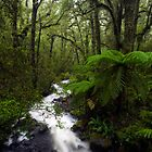 Fiordland Wilderness by Michael Treloar