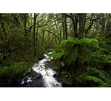 Fiordland Wilderness Photographic Print