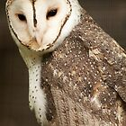 Masked Owl by Danielle  Miner