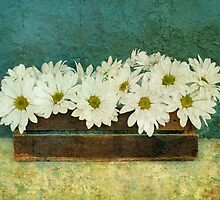 Spring Daisy Box by Barbara Ingersoll