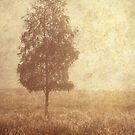 Lonely Tree. Trossachs National Park. Scotland by JennyRainbow