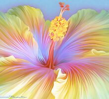 Hibiscus Flower by Shannon Posedenti