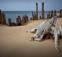 Tree Stump on the Beach at Kirk Park by Randall Nyhof