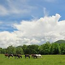 horses in the cove by dc witmer