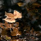 Autumn Leaves - Surface Water Tension by Sandra Chung